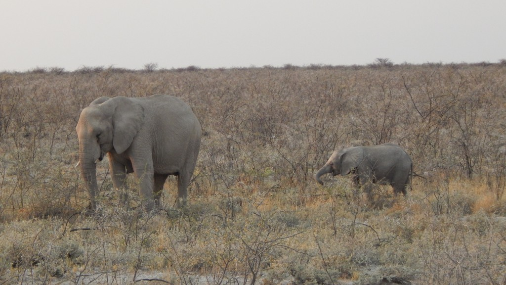 Two elephants in Etosha