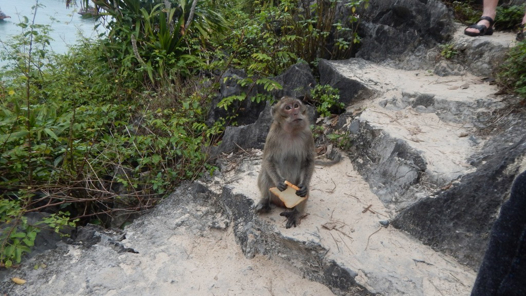 A macaque clutching tourist-given bread